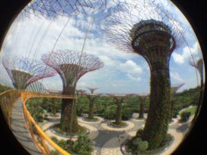 singapour-janvier-2015-10